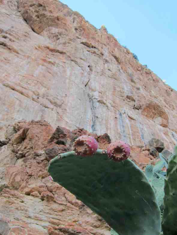 Prickly pads and looking at one of the classic La Diagonal, 2 pitches which can be linked into one 65m pitch of 7a+. Superb!