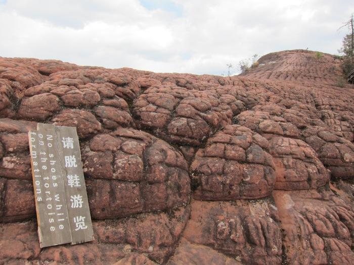 Thousand turtles!! Tourist view!