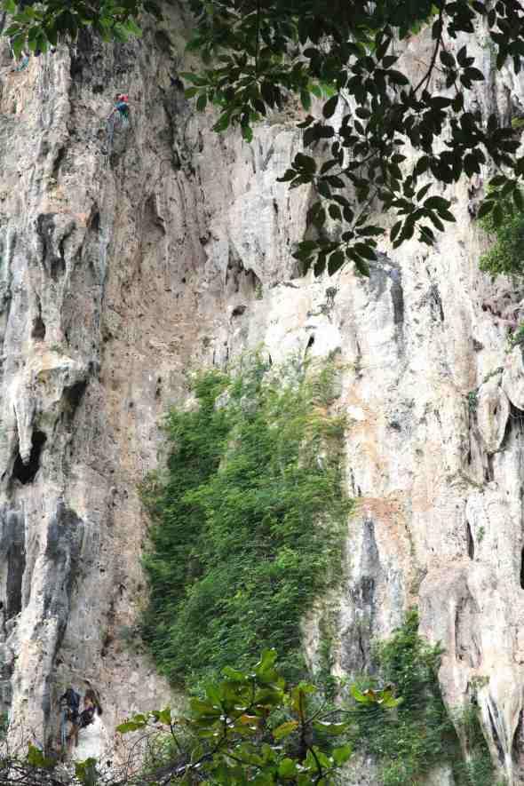 Climbing on Monkey world