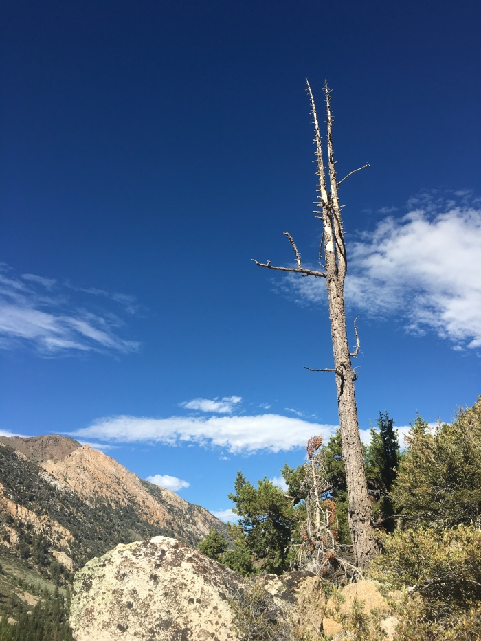 Botak head tree on the way to Incredible Hulk